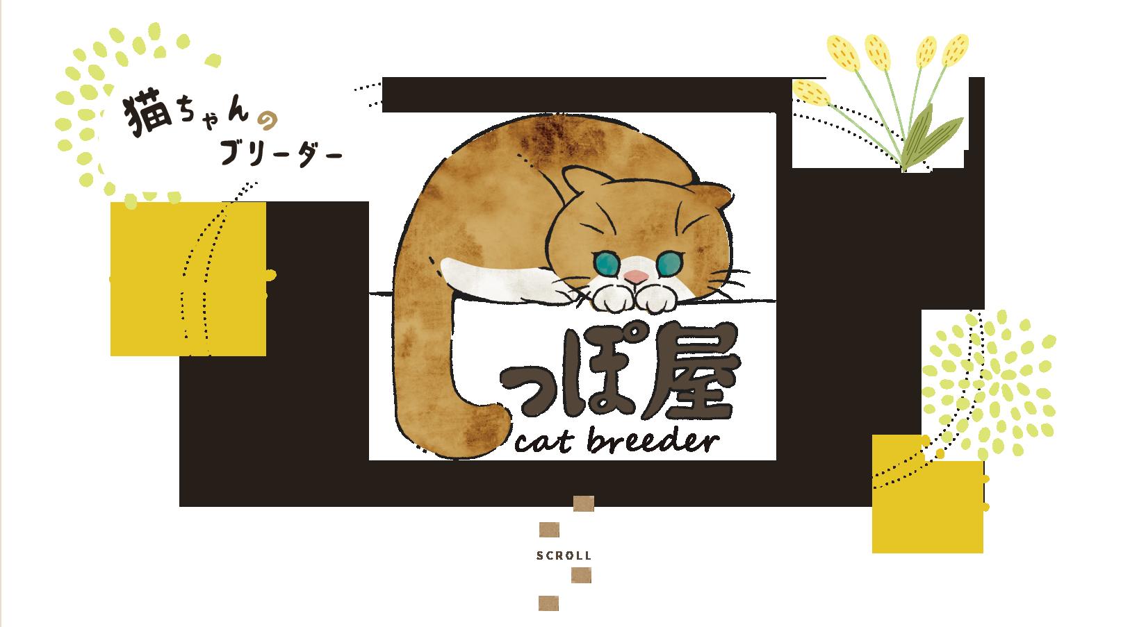 猫ちゃんのブリーダー しっぽ屋